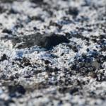 Detalle del suelo volcanico con restos salinos.