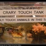 Tanque con especies para tocar.